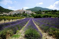 venterol lavender fields walking holidays in france